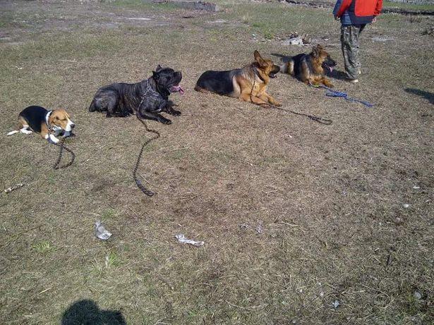 Dresaj Canin, La Domiciliul Clientului