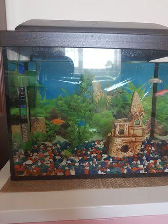 Продам аквариум, 40 литров+ всё необходимое для аквариума+ 3 рыбки