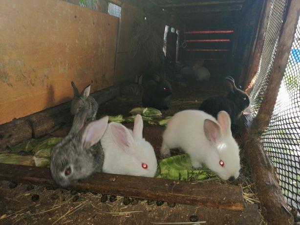 Продам крольчата  1.,5 месяца