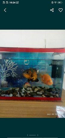 Рыбы с аквариумом