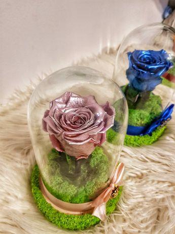 Trandafir criogenat cupola 16x9 cm