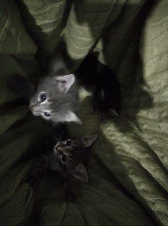 Мысык 1 ай котята 1 месяц