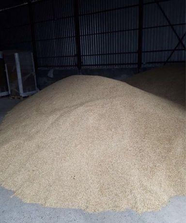 Продам корм (пшеница, ячмень)