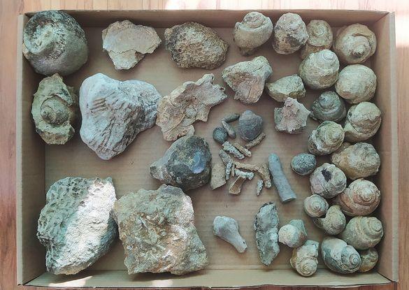 Вкаменелости фосили