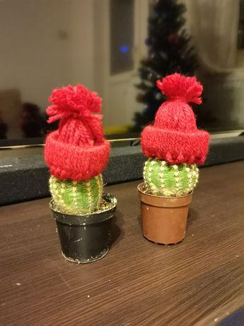 Cactuși, Aloe... suculente de vânzare