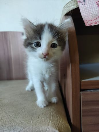 Срочно отдам котенка в добрые руки!