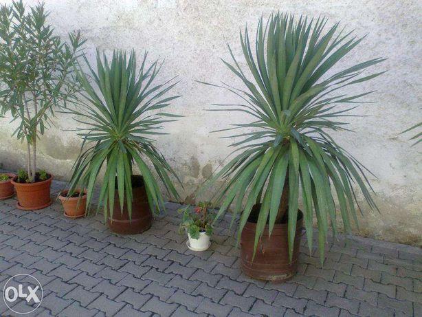 Plante ornamentale diverse