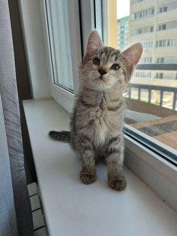 Котёнок для любви и ласки