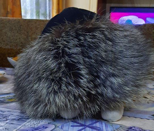 Продам шапку чернобурка