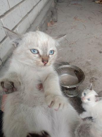 Котята.Возраст 1,5 месяца