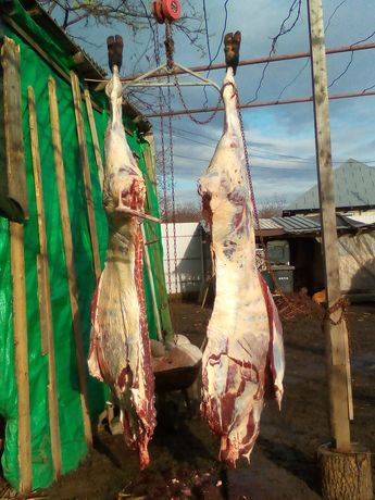 Vând vitei carcasa
