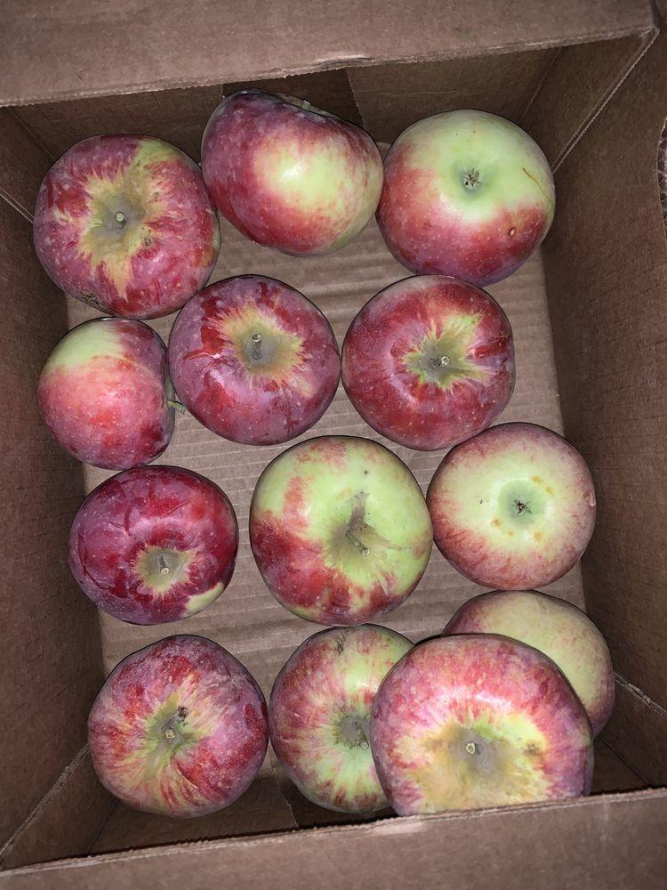 Апорт для подарков яблоки