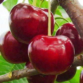 Vând pomi fructiferi