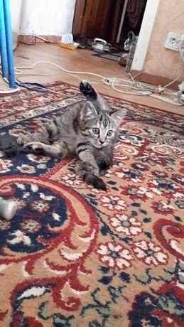 Отдам котенка в надежные руки