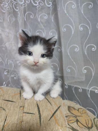 Котята ищут заботливую семью