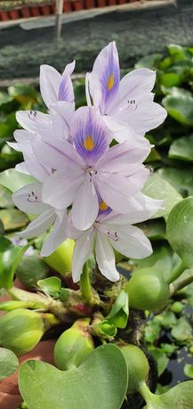 Саженцы и цветы выращенные у нас в оранжерее много разных звоните.