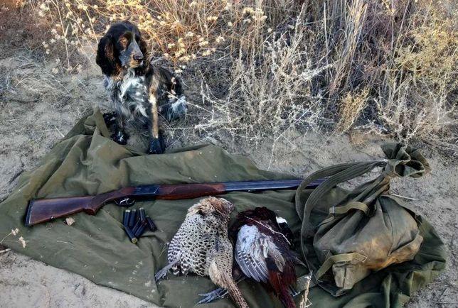 Продам щенков русского охотничьего спаниеля.
