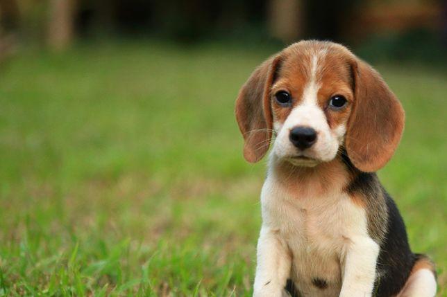 Plimb câini 20 de lei ora