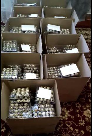 Бодене жумырткасы ОПТОМ сатылады, продам перепелиное яйцо