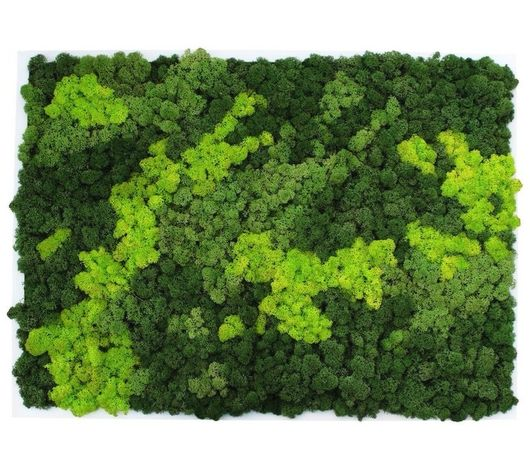 Licheni naturali- realizam orice model