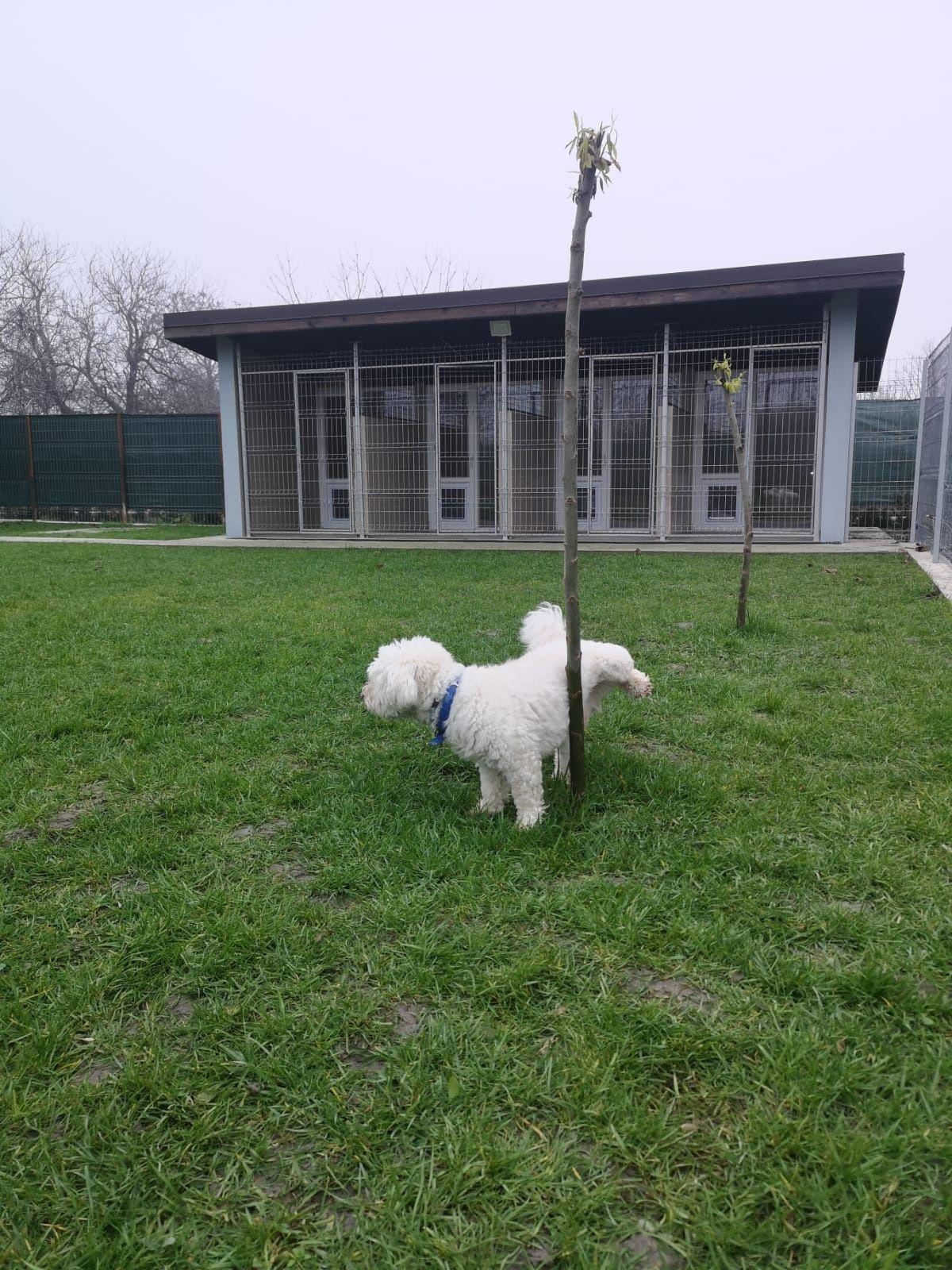 Pensiune canina Apache Bragadiru Mihăilești București