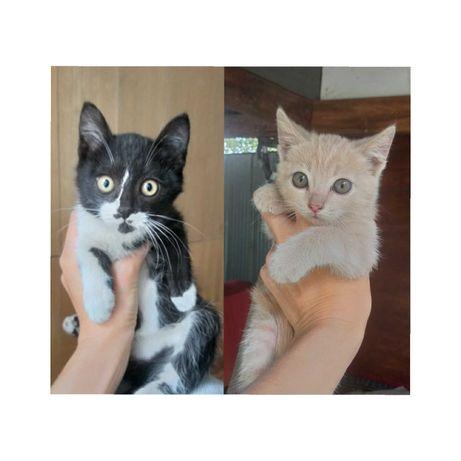 Чудесные котята в добрые руки. Доставка)