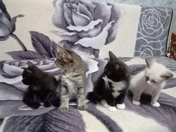Котята 3 мальчика 2 девочки