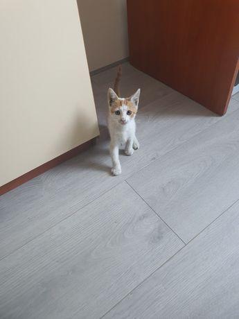 3 месечни котки търсят добър дом