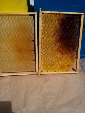 Изградени пчелни пити-празни и пълни с мед.Ценрофуга