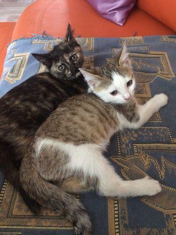 Отдам 2-х котят Мальчик и Девочка