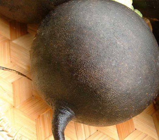 Семена редьки Карбон 1 кг