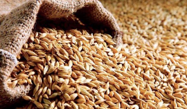 Пшеница, ячмень!