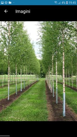 Va oferim o gama foarte mare de plante ornamentale prețuri accesibile