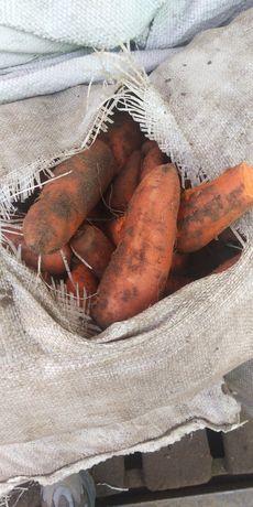 Морковь дёшево для скота
