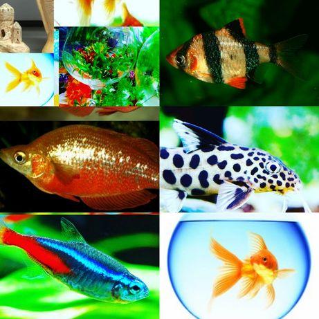 Рыбки в Афалине
