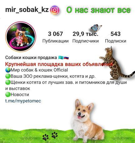 Собаки кошки крупнейшая площадка по казахстану