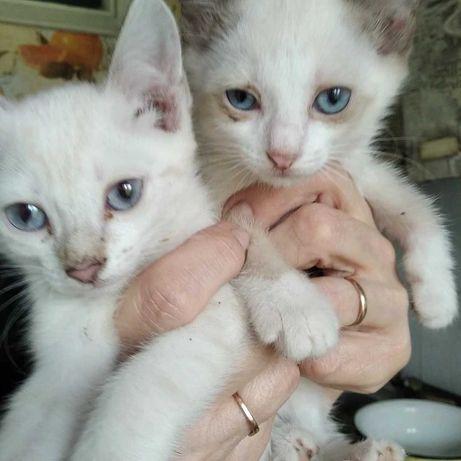 Кошки и котята срочно ищут дом