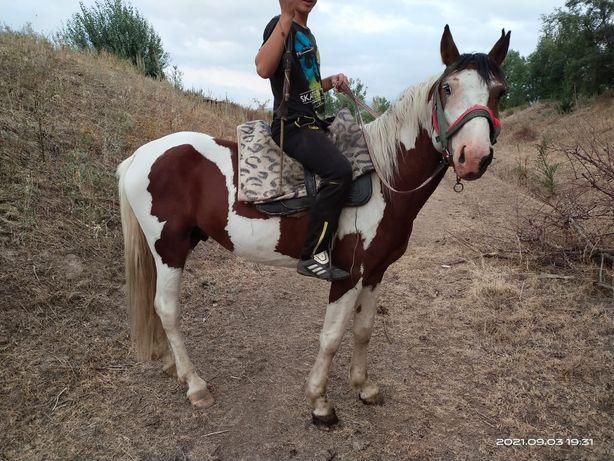 Продам лошадь апачи
