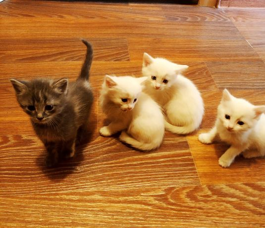 Отдам ласковых котят в дар