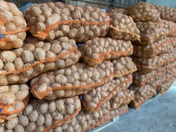 Cartofi consum, preț negociabil