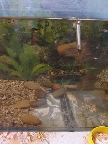 Продам аквариум с компрессором