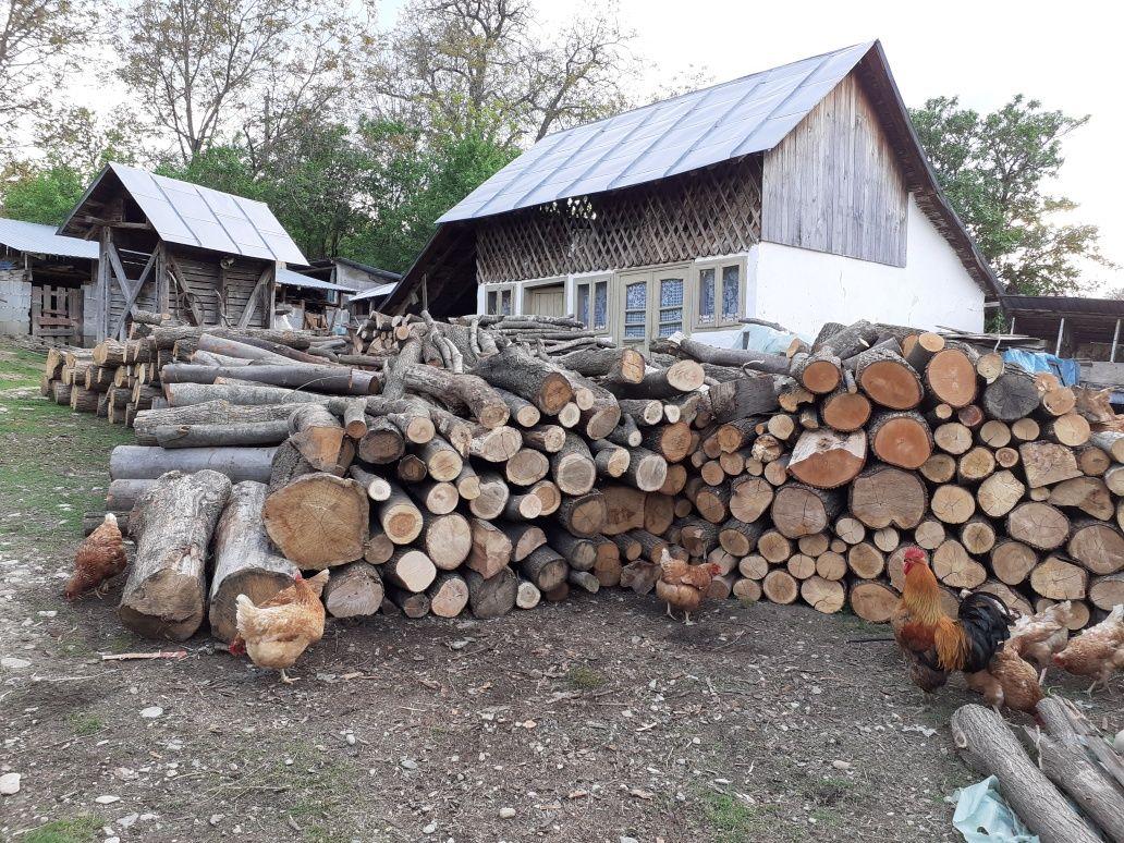 Lemn de foc fag,carpen și stejar