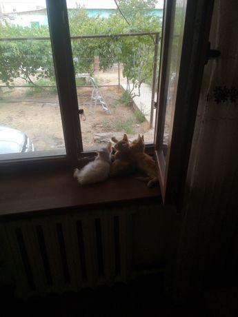 Отдаем котят бесплатно