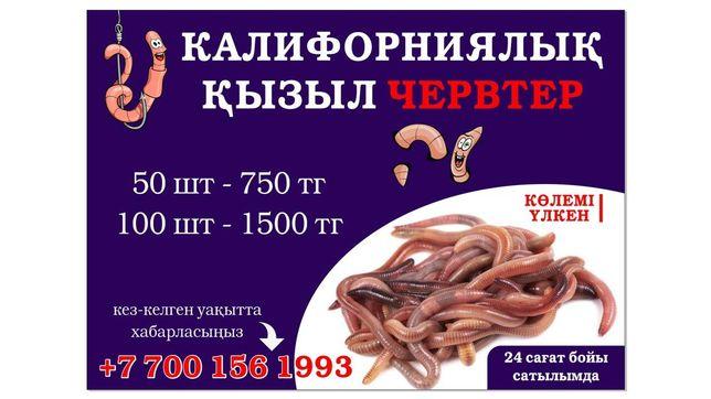 шылаушын черви шылаушын черви
