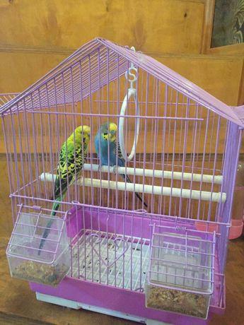 Попугай, попугай