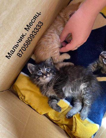Красивые котята ищут любящую семью
