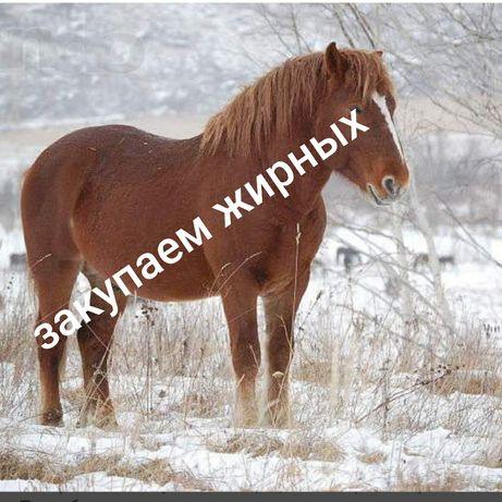 Лошади разные тай,байтал,кунан,жеребят
