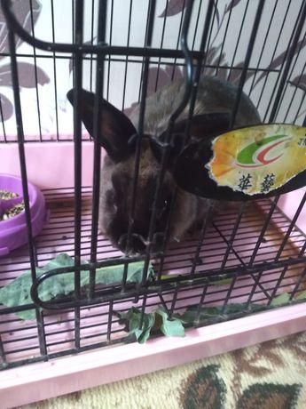 Продам кролика с клеткой 3000тг.
