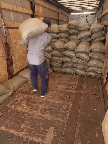 Бидай зерно пшеница оптом Абайда