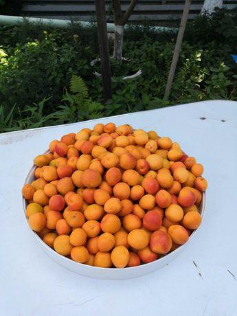 Продам саженцы абрикос